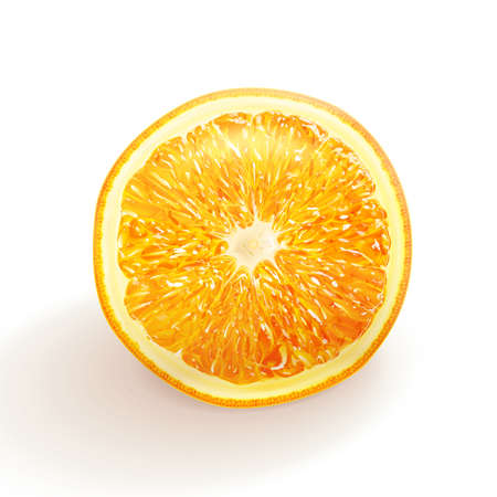citric: Vector realistic orange. Natural citrus illustration. Sweet fruite offer. Illustration