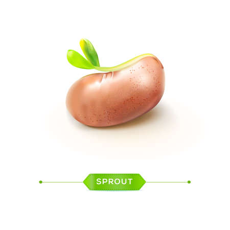 sprout growth: Sprouted grains realistic Bean with young sprout vector illustration.