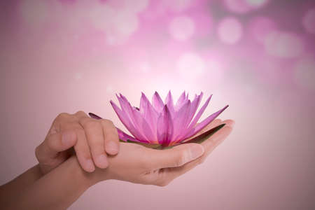 handcare: Water lily flower in woman hands