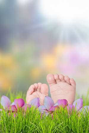 Child feet with plumeria flower on green grass in a summer park. Stock Photo