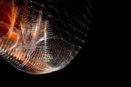 fishnet: Beautiful Fishnet Background Photograph