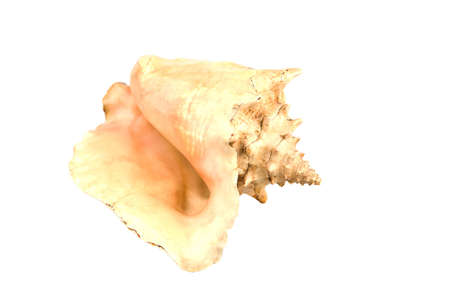 Seashell on the white background, and all this in isolation Stock Photo