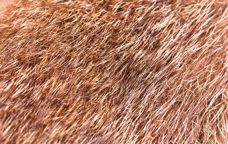 Warm fur of a wolf, it is possible to use as texture