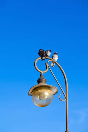 Three pigeons sitting on the lamp, the blue sky behind