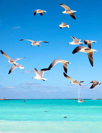 Sea gulls fly over the sea, cutting through a beautiful blue sky