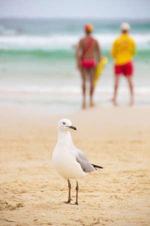 seagull on sand on the beach photo