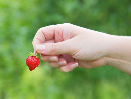 female hand holding a strawberry photo