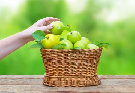 hand basket: apples in a basket on wooden table against garden background