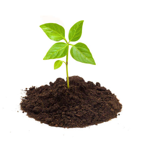 soil pollution: Young green plant isolated on a white background Stock Photo