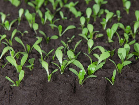 agronomist: young green plant in the ground Stock Photo