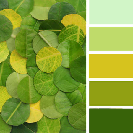 colorful texture of the leaves. Color palette swatches
