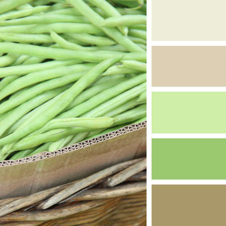 hues: Green bean at the Indian market  color palette swatches. pastel hues