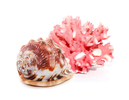 hard coral: Coral and shell isolated on white background Stock Photo