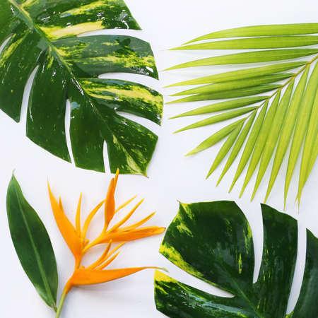 흰색 배경에 태블릿와 열대 식물 스톡 콘텐츠
