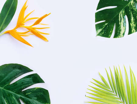 tropical plants on white background 写真素材