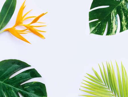 tropical plants on white background Reklamní fotografie