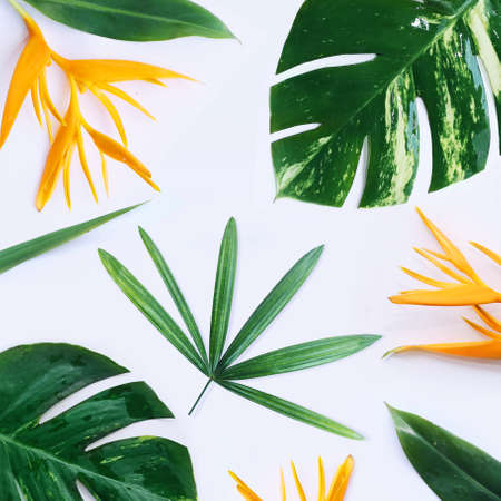 tropical plants on white background Stock Photo