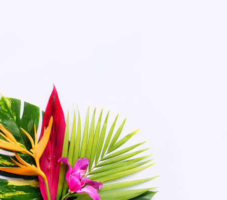 흰색 배경에 열 대 꽃