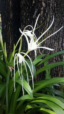 beside: White flowers beside tree