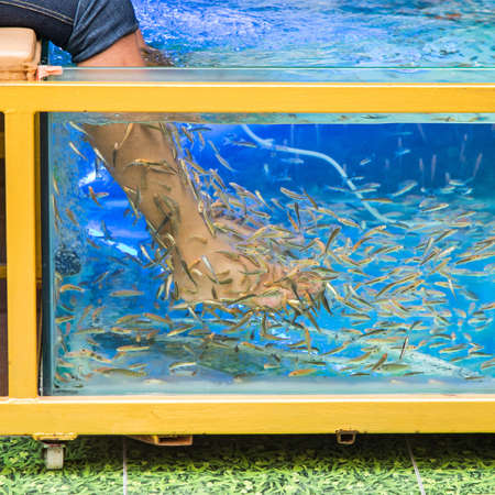 fish pedicure spa treatment, rufa garra fish Stock Photo