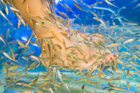 fish pedicure spa treatment, rufa garra fish 版權商用圖片