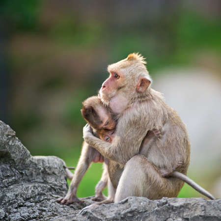 baby monkey: Monkey, loving ties.