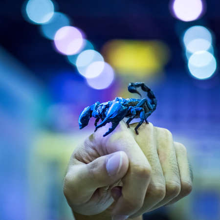 bioluminescent: Bioluminescent scorpion under ultraviolet light grip on the hand of man.