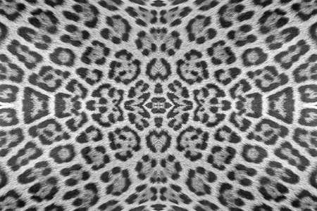 fourrure l�opard: Leopard fur background