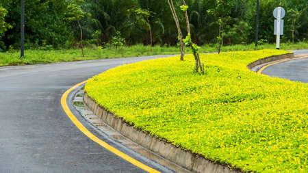 Beauty yellow weed roadside Stock Photo