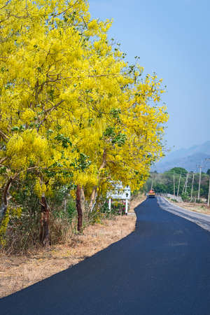 Cassia Fistula Flower are on the local road. Stock Photo
