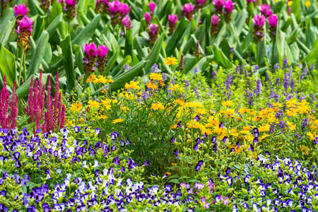 colorful flower in the garden. Stock Photo
