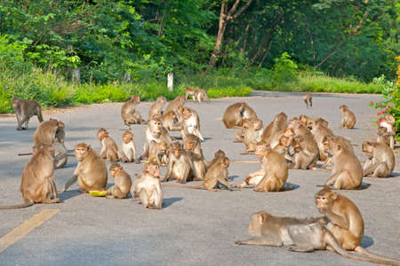 rain forest animal: Sit on Monkey Forest Road. Stock Photo