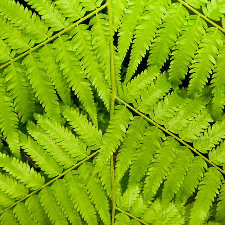 Close-up Green leaves background,