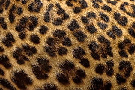 ヒョウの毛皮の背景を閉じます。