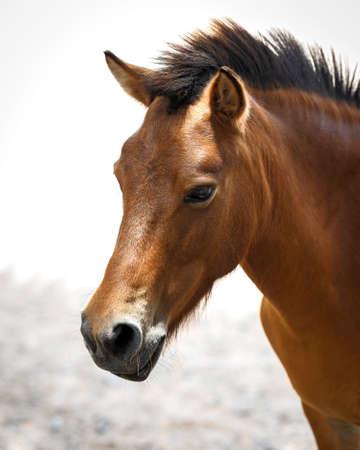 A head shot of a pretty horse.