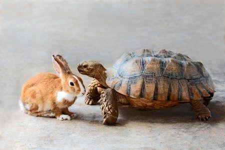 Królik i żółw rozmawiają o konkursie.