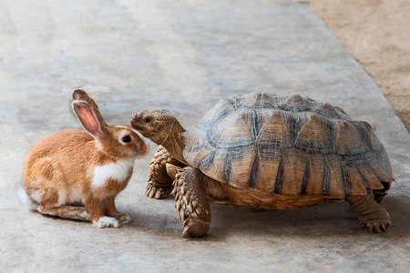 ウサギとカメが競争について話し合っている。 写真素材 - 103284917