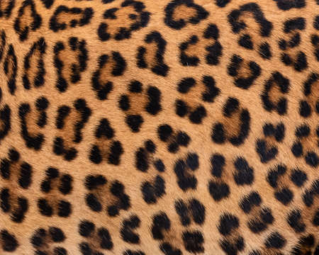 Close Up leopard fur for background. (real fur)