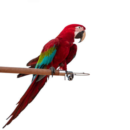 Colorful Red-and-green Macaw Parrot bird isolated on white background (green-winged macaw) 写真素材