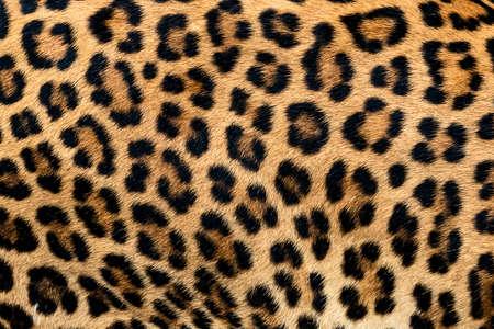 Trama di pelliccia di leopardo (vera pelliccia)