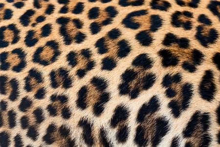 Leopard fur texture (real fur) 免版税图像