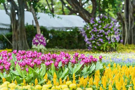 Various flower gardens and beautiful krachiew flowers. Banco de Imagens