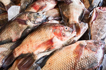 fresh tilapia fishes in the market 版權商用圖片 - 150149475