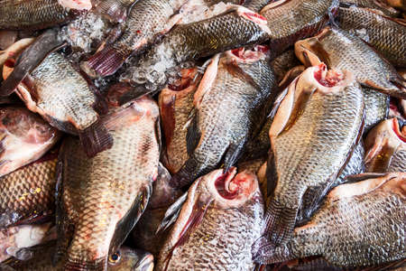 fresh tilapia fishes in the market 写真素材
