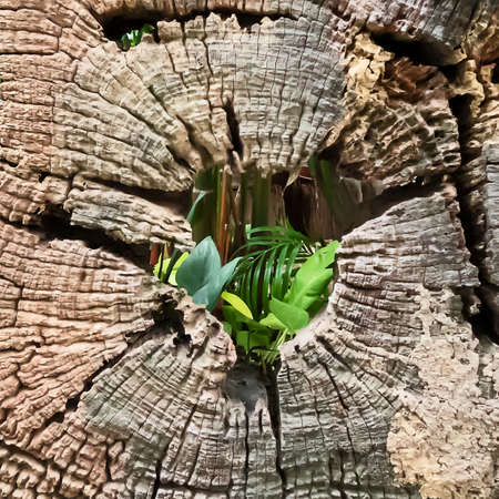 The close up Details of the old tree stump 写真素材