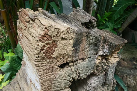 The close up Details of the old tree stump 版權商用圖片