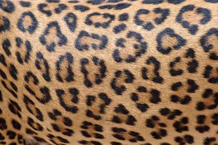 Leopard fur background (real fur)