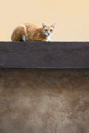 Cat lying on the wall in the morning