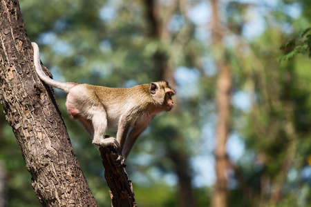 The daily lives of small monkeys, tropical forests, Thailand. Stock Photo