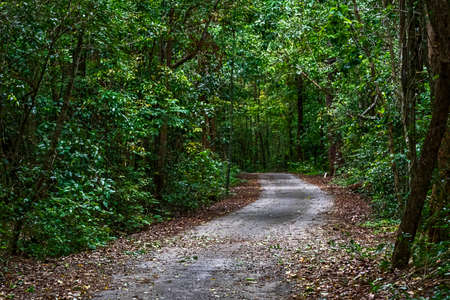 Path in the natural forests of Thailand